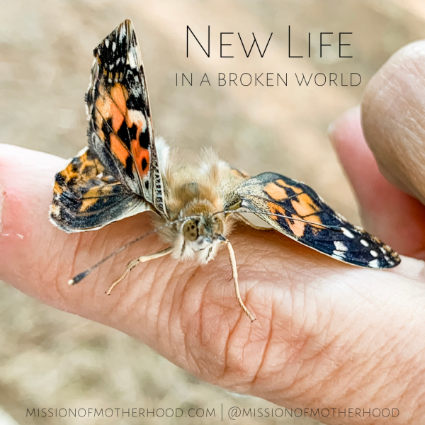 New Life in a Broken World - missionofmotherhood.com